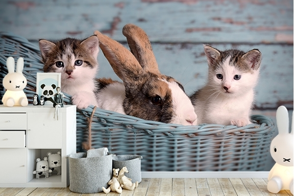 Picture for category Cute animals