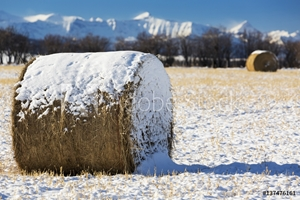 Picture of Close up of snow covered hay bale in a snow covered stubble field with snow covered mountains in the background and blue sky; Longview, Alberta, Canada