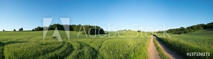 Picture of  Panorama summer green field landscape with dirt road