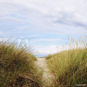 Picture of Coastal path on grassy sand dunes