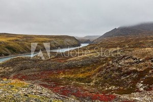 Picture of autumn tundra in fog and river Amguema Arctic Circle, Russia