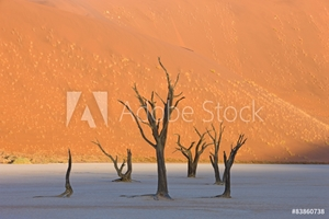 Picture of Dead Vlei in der Namib
