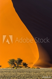Picture of Famous red dune 40 and acacia tree at the foot of it. Sunrise in Sossusvlei, Namib Naukluft National Park, Namibia