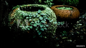 Picture of Fern and ivy on old earthenware jar,