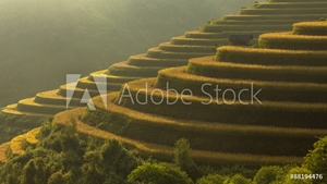 Picture of Beautiful Rice Terraces, South East Asia