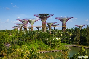 Picture of Daytime view of the Supertree grove at Gardens By The Bay, Singa