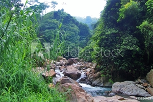 Picture of Indonesia River Forest