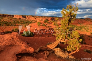 Picture of Capitol Reef National Park, Utah, USA