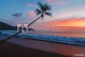 Picture of Blue sky with pink sunset and palm tree as waves roll in