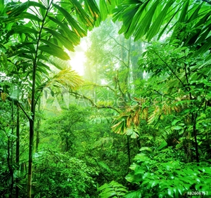 Picture of Fresh green rainforest
