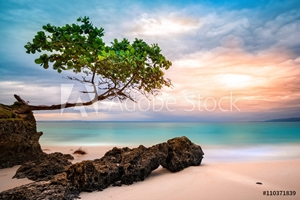 Picture of Exotic seascape with sea grape trees leaning above a rocky Caribbean beach at sunset, in Cayo Levantado, Dominican Republic