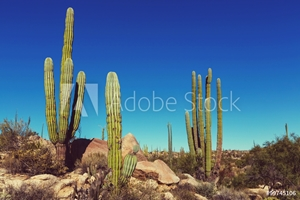 Picture of Cactus in Mexico