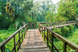 Picture of Boardwalk in eco-archaeological park Los Naranjos, Honduras