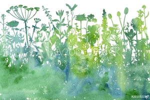 Picture of Watercolor background with drawing herbs and flowers