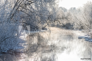 Picture of Winter landscape - frosty trees in sunny morning. Tranquil winter nature in sunlight
